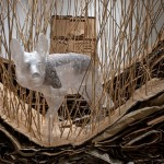 Reckoning a Peripheral Wilderness. 2012. Cardboard, phragmites reeds, plastic, mixed materials.