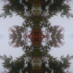 """Fog, 2013 Pigment print on archival paper, 68 x 44""""    Courtesy of the artist/Private Collection"""