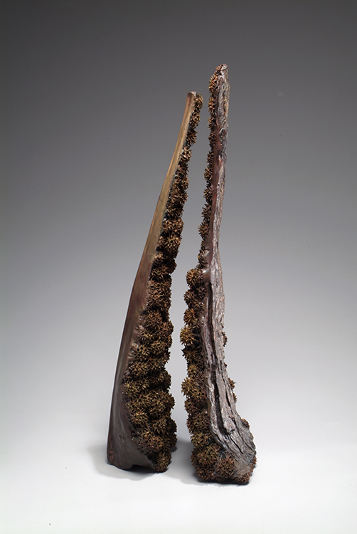 Sole Shard #18, 2004, bark, tree pods, and encaustic, 17 x 10 x 9 in. Photography by Tim Thayer.